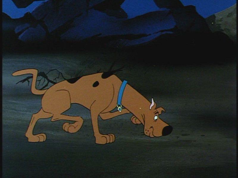 Scooby-Doo cherche des indices.